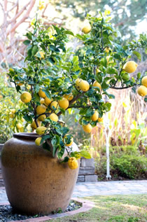San Diego Master Gardeners Things To Do In The Garden In