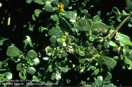 Plant a Seed Watch It Grow - Weeds - Types of Weeds